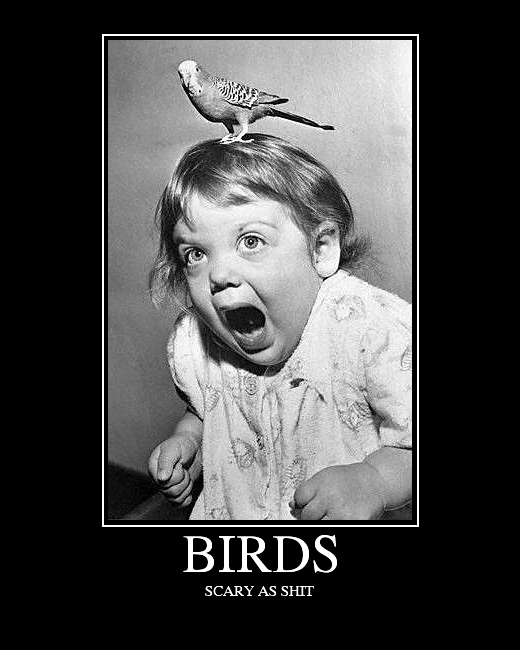 birds_max
