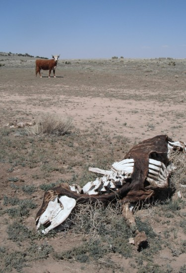 life and death on the high plains