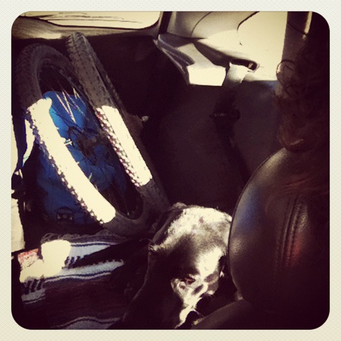 Dog, wheels, bag full o' clothes and bourbon...yes, it's a road trip.