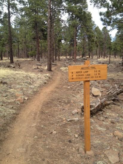 AZT signpost