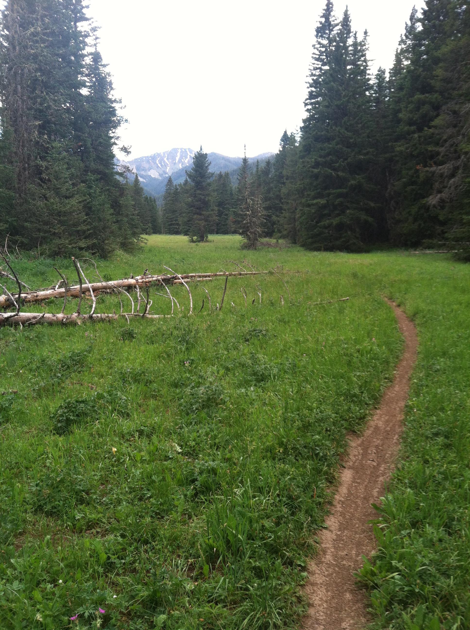 Montana singletrack
