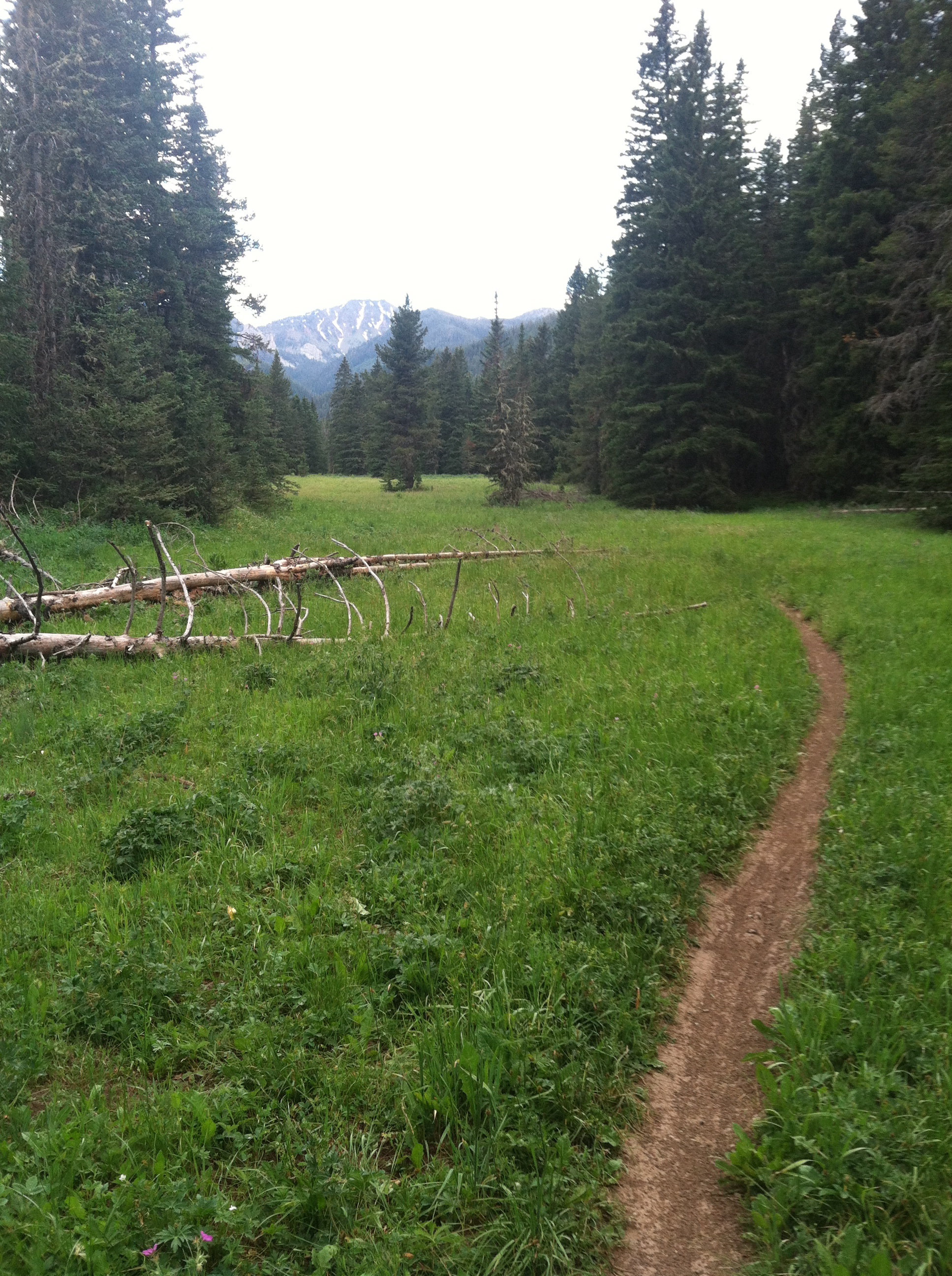 Montana singletrack