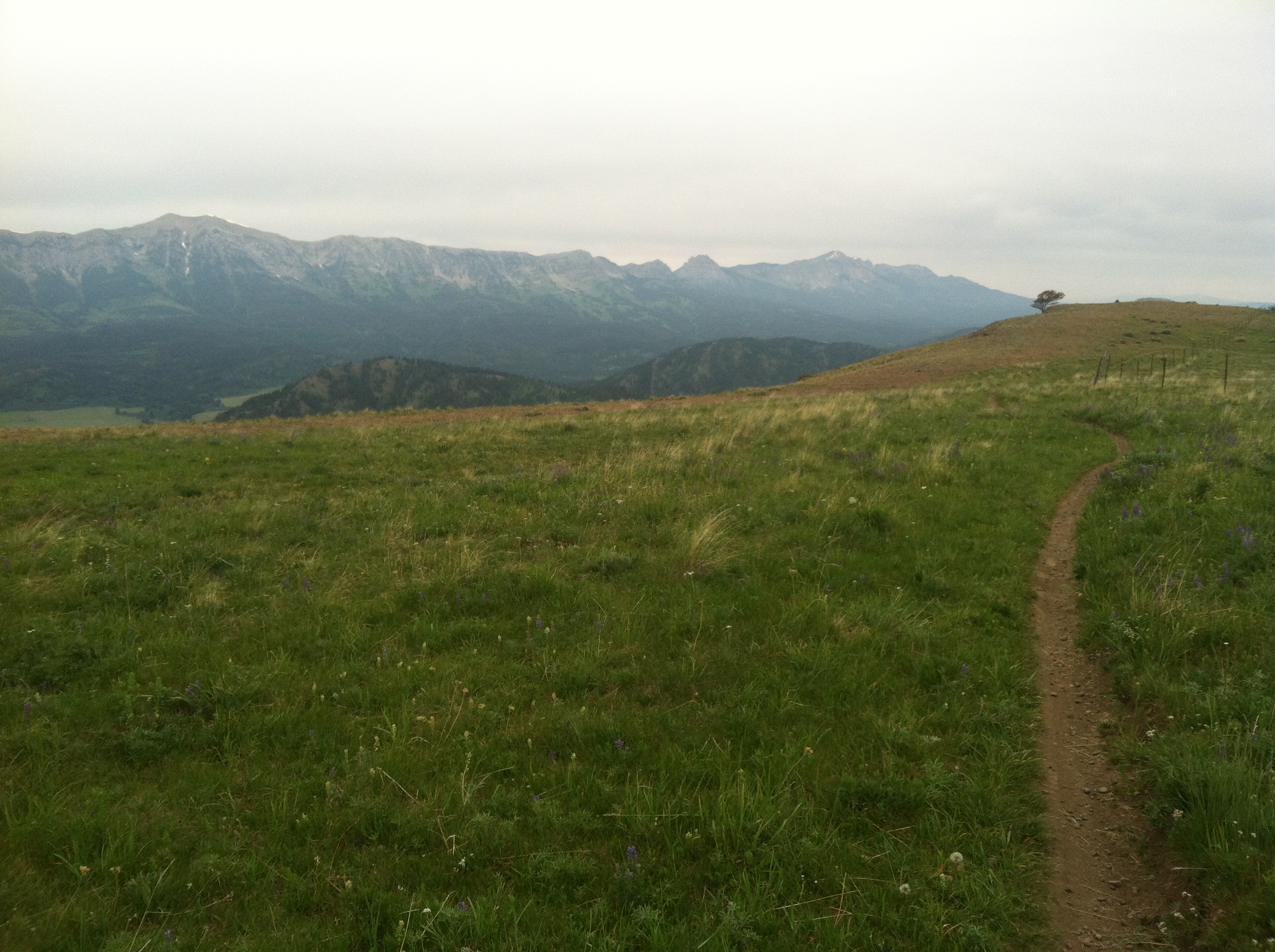 A sweet ribbon of singletrack along a ridge in Montana, life doesn't get much better than that