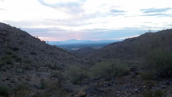 Javelina at sunrise is a wonderful thing